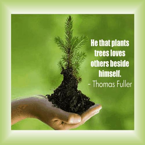 Fuller tree quote