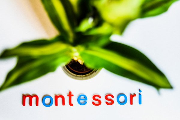 Montessori-Method-with-Plant